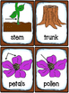Plants and Soil - 40 Vocabulary Cards