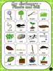 Plants and Soil - Word Wall (39) and personal dictionary