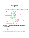 Plants and Their Environment Quizzes (Set of 4)