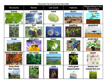 Plants and Their Environments Picture Sort