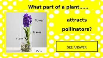 Plants and Their Parts PowerPoint Game