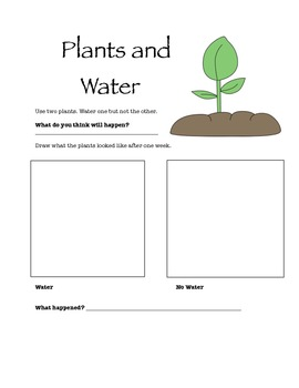 Plants and Water Experiment Worksheet