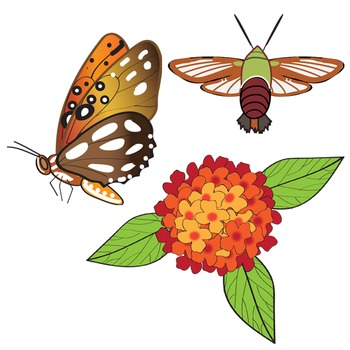 Plants and their Pollinators Clip Art Set