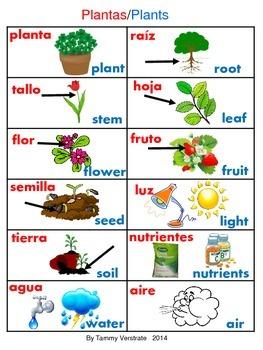 Plants bilingual Poster