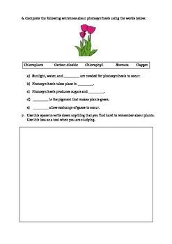 Plants for 3rd Grade