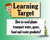Plants for Food and Fiber Unit Bundle #1