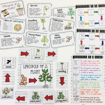 Plants for Primary Teachers