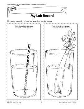 Plants have stems that carry water and nutrients.