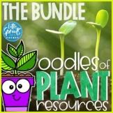 Plants in Preschool, PreK & Kindergarten, Pre-K