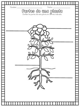 Plants in Spanish