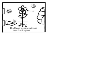Plants little book-parts of a plant(foldabale included)