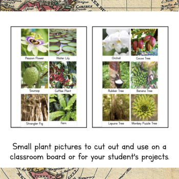 South America Unit Study: Plants of South America Information Cards