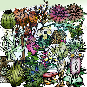Plants of the Americas - Botany 60 pc. Clip-Art BW and Color!