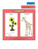 Plants or Animals!  (Classifying  Plants & Animals)