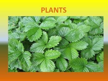 Plants  (parts and uses)