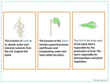 Plants parts flash cards