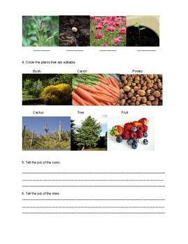Plants test/assessment/quiz