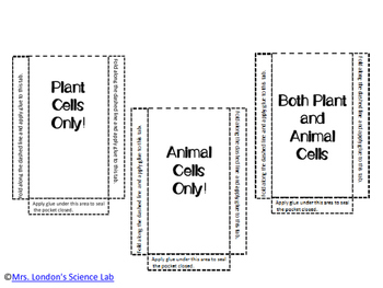 Plants vs. Animal Cell Organelle Pockets for ISN