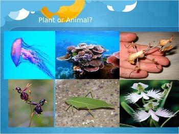 Plants vs. Animals Classification PowerPoint