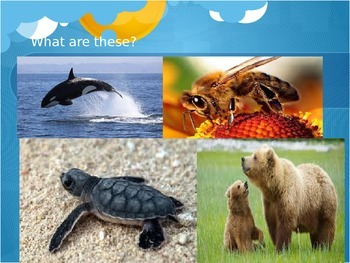 Plants vs. Animals Classification PowerPoint