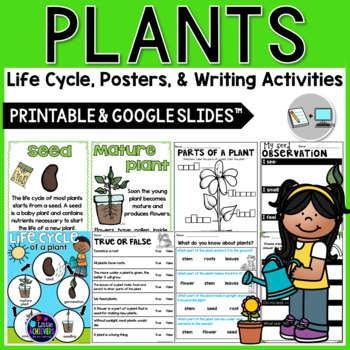 Life Cycle of a Plant - Plant Life Cycle, Parts of a Plant and Its Needs