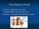 Plasma Membrane Powerpoint