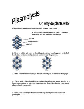 Plasmolysis