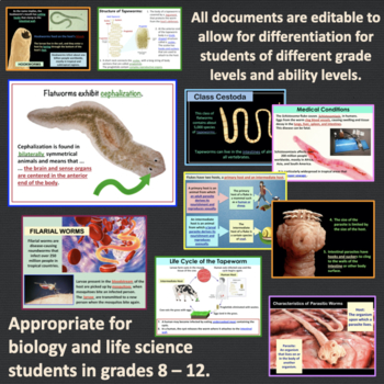 Platyhelminthes and Nematoda (flatworms and roundworms) powerpoint