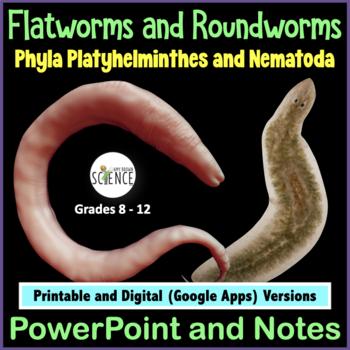 Ppt platyhelminthes és nemathelminthes, Ízeltlábúak – Arthropoda