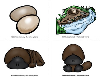 Life Cycle of the Platypus