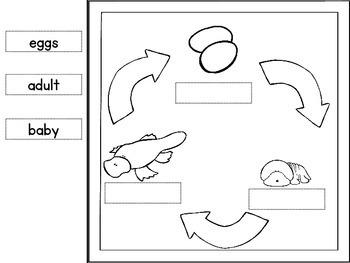 Platypus Life Cycle