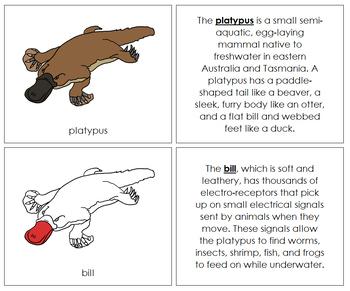 Platypus Nomenclature Book (Red)