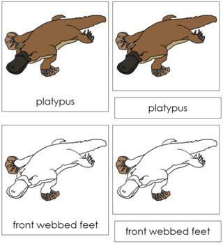 Platypus Nomenclature Cards