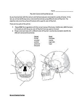 Play-doh Cranium Lab