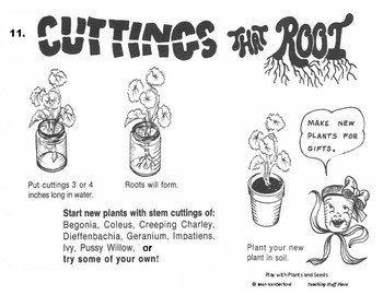 PLANT ACTIVITIES TASK CARDS   SCIENCE FAIR   Grow  Plants and Seeds   Hands-on