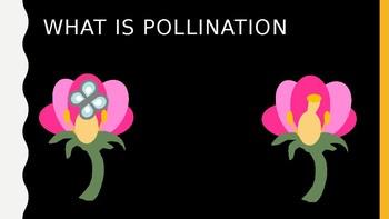 Plenty of Pollinators