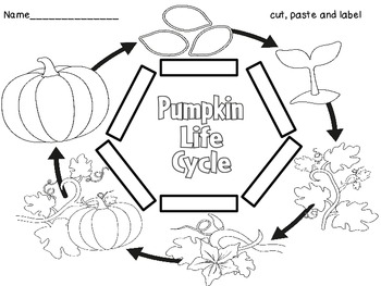 Plenty of Pumpkin Printables!