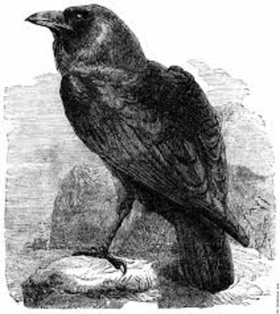 """Poe's """"The Raven"""" Stanza Close Reading:  A Partner Activity"""