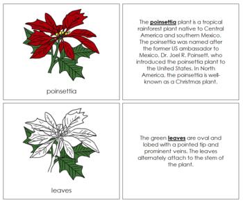 Poinsettia Nomenclature Book