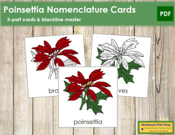Poinsettia Nomenclature Cards