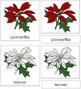 Poinsettia Nomenclature Cards