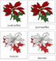 Poinsettia Nomenclature Cards (Red)