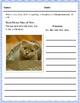 Point of View Activity Pack with Worksheets, Task Cards, & More!