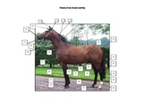 Points of the Horse Word Search