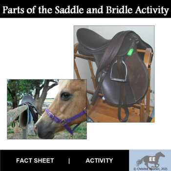 Points of the Saddle and Bridle Activity