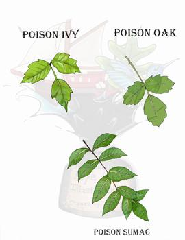 Poisonous Plants Clipart - Botany