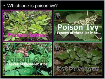 Poisonous Plants, Poison Ivy Identification