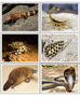 Poisonous and Venomous animals Sorting cards