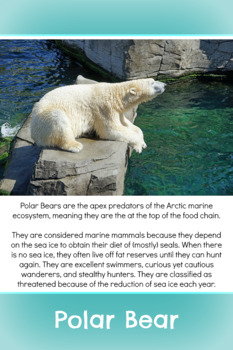 Polar Animal Fact Card Bundle