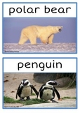 Polar Animals Photo Set